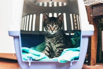 Zu vermeidende Verhaltensweisen gegenüber deiner Katze