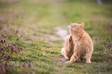 9 Fakten über die Katzen-Sprache
