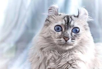 Die seltensten Katzenrassen