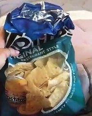 La réaction de ce chien quand il entend le bruit des chips : mythique