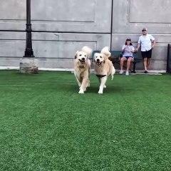 La folle amitié entre ces deux chiens apaise la toile