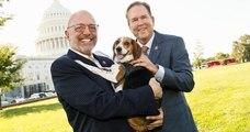 Aux États-Unis, la Chambre des représentants a adopté un projet de loi qui ferait de la cruauté envers les animaux un crime fédéral