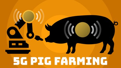 How 5G is being used by pig farmers