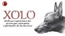 Dedican exposición a los perros que eran guías espirituales de los mexicas