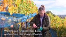 30 years since fall of the Berlin Wall, Saxon vineyards flourish