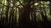 """La forêt amazonienne proche du """"point de bascule irréversible"""" si rien n'est fait… d'ici deux ans"""
