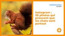 Instagram : 20 photos qui prouvent que les chats sont partout