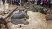 Bataklığa saplanan fili kurtaran köylüler ezilme korkusu yaşadı