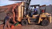 Des bûcherons découpent un Séquoia géant avec une énorme tronçonneuse