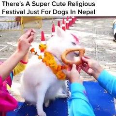 Saviez-vous qu'un festival religieux très mignon au Népal est réservé aux chiens. Vous serez bluffés