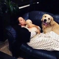 Quand un chien devient jaloux d'un autre chien. A mourir de rire !