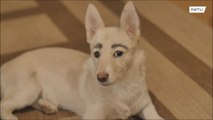 Wuff-brows! Street dog found owner who fell in love with her human-like face