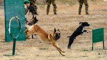 Five Ways The Military Uses Dogs For Dangerous Missions
