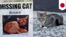 '애완동물이 집을 나갔다? 길고양이에게 물어보면 찾아줘요! '외 5개
