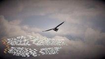 Texting Eagles Bankrupt Russian Bird Study