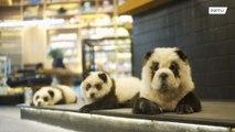 パンダ…じゃない!動物の扱いを巡りパンダカフェが炎上中