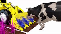 Learn color with Cow Cow Bulldozer Truck