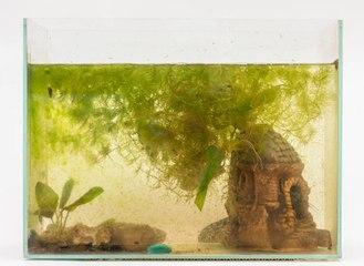 Comment lutter contre la prolifération d'algues dans mon aquarium ?