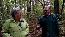 Cueillette des champignons : quelles précautions prendre ?