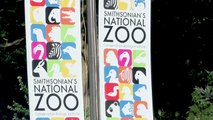 Not Photoshopped! National Zoo Welcomes Mustachioed Monkeys