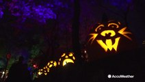 What's more Halloween than a jack-o'-lantern festival