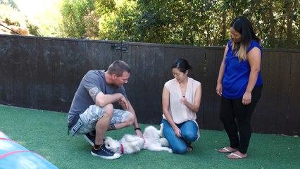 Lucky Dog - Lilo's Hidden Talent
