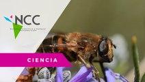 Este es el santuario de las abejas sin aguijón polinizadoras de Colombia