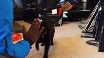Un chat qui comprend la langue des signes