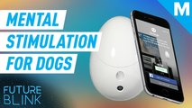 Go Dogo is designed to keep your dog mentally stimulated while you're away - Future Blink