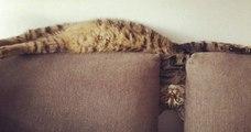 Ces photos de chats dans des positions étirées et improbables sont à mourir de rire
