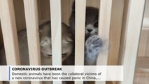 Pets are collateral victims of coronavirus in China