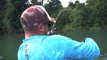 Fish Finder Búsqueda de Pacu con señuelos bajo el agua!