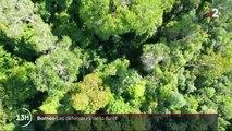 Bornéo : à la rencontre des défenseurs de la forêt