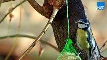 Les_oiseaux_dans_la_Drome_et_en_Ardeche