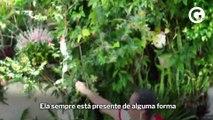 ESse Samba: a comunidade da Piedade