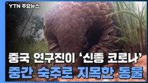 """중국 연구진 """"천산갑이 신종코로나 중간숙주 가능성"""" / YTN"""