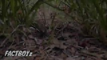 सांप के पैर क्यों नहीं होते   सांप   Snake   History of snake   facttechz   snake   snake video