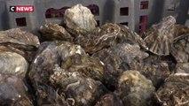 Charente-Maritime : le coronavirus bloque les exportations d'huîtres vers la Chine