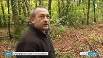 Santé : attention à l'intoxication aux champignons