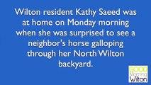Une caméra de surveillance a capturé la vidéo d'un cheval en cavale tombant dans l'eau d'une piscine.