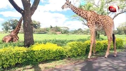 Magical Scenes: Wildlife around Lake Naivasha in Kenya