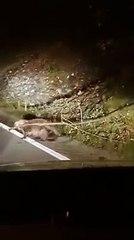 Quand un animal improbable traverse la route en pleine nuit...