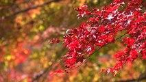 단풍과 억새 물결에 깊어져 가는 가을 / YTN