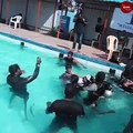 In Chennai, one-day scuba diving training program held for persons with disabilities