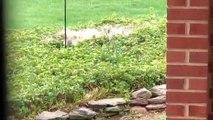 Regardez cet écureuil essayer de grimper sur un pilonne.. il glisse !