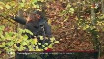 Champignons : les cueillettes abusives inquiètent