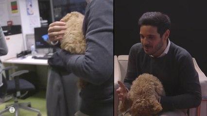 Lucas, el perro de Albert RIvera, se divierte en la redacción de El Mundo
