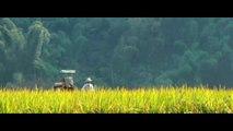 The Painted Veil Movie (2006)  Naomi Watts, Edward Norton, Liev Schreiber