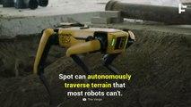 This Robot Can Autonomously Traverse the Roughest Terrain