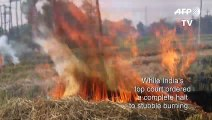 Indian farmers say they have no choice but to burn stubble despite alarming pollution levels